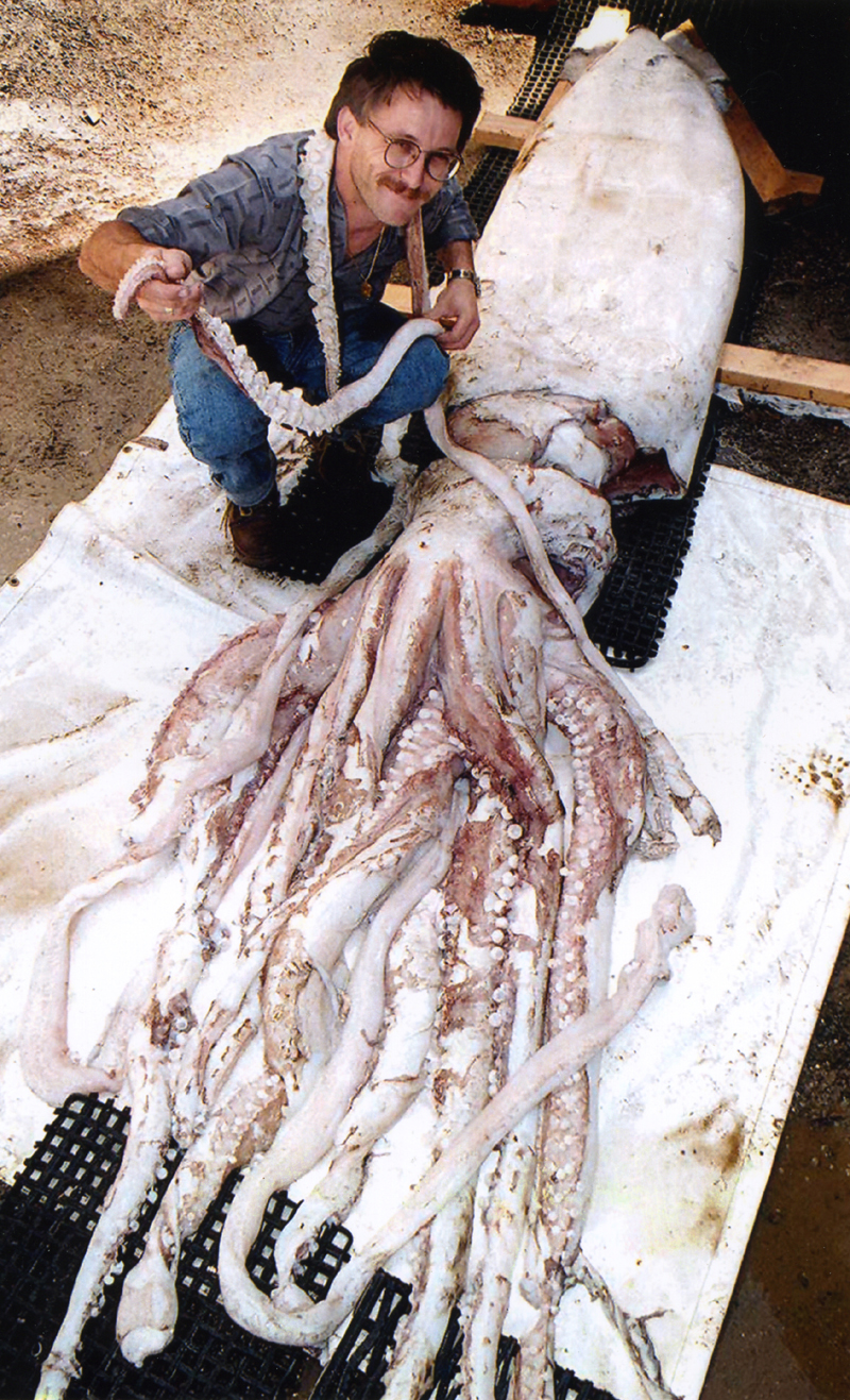 Giant Squid or Kraken